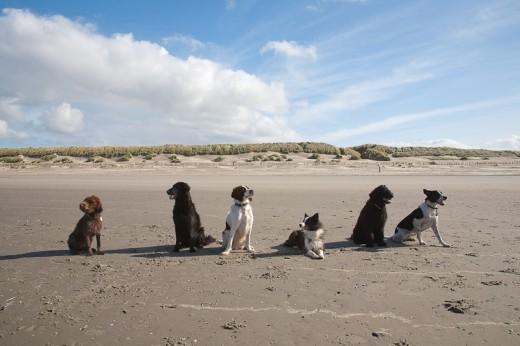 Hondjes op het strand